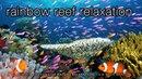 3 HOURS of Amazing Colorful Reef Sea Life in HD 1080p No Music Tahiti Raratonga Indonesia