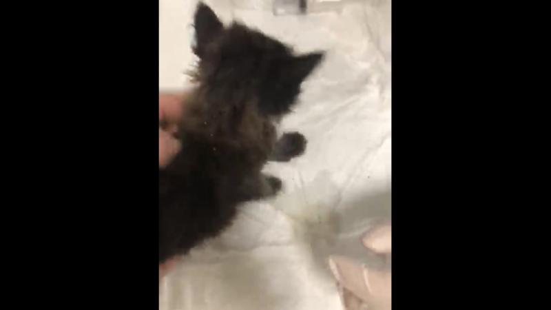 Малыш избавляется от ушных клещей