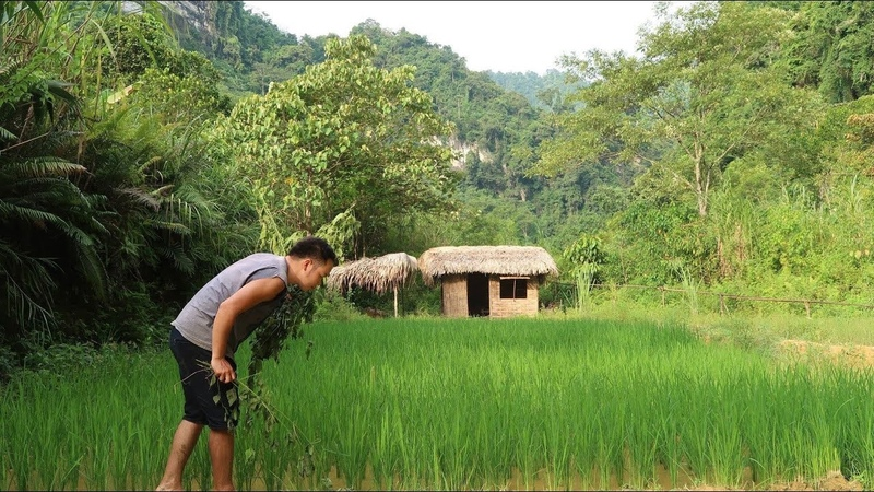 Primitive Skills: Baby fish Take care of rice fields
