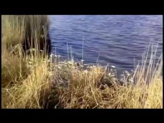 На дамбе за поселком Караси всплыла мертвая рыба!