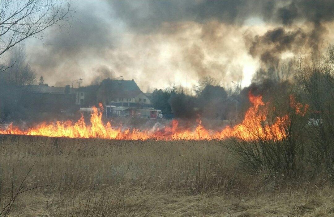 В Советске  неизвестные подожгли траву недалеко от газовой заправочной станции