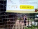 Маэстро Заур играет в клетке со львами на Дне рождения Барнаульского зоопарка