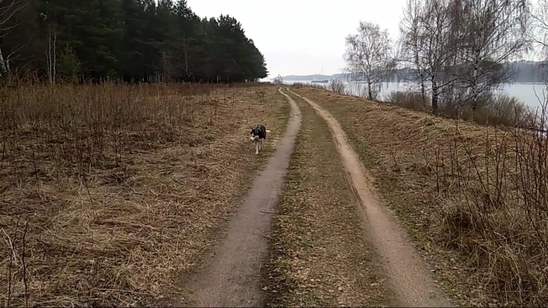 Утро прокулка на р Волга Альфа отдыхает от щенков