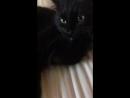Мой котик 🐈 умывается