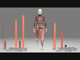 Биомеханика - работа мышц ног во время ходьбы