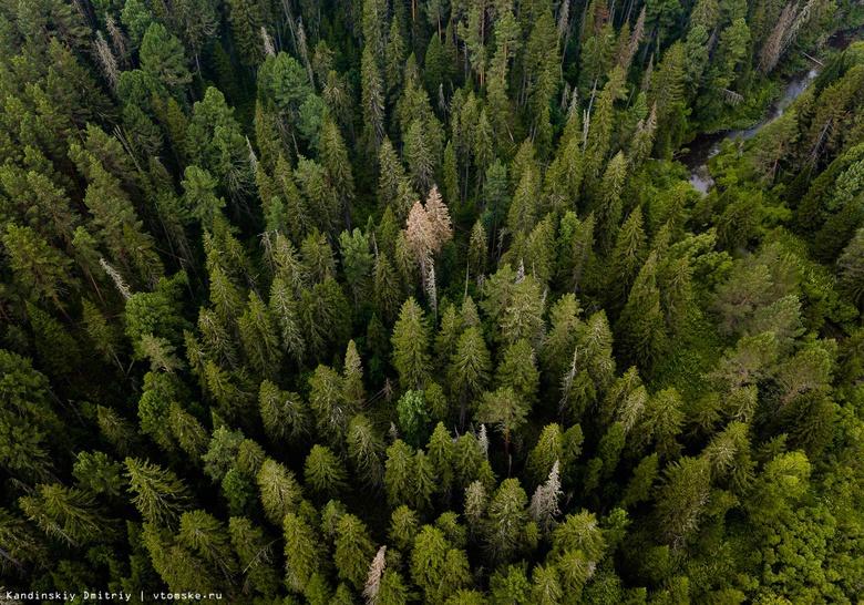Лесничий Тегульдетского района оформил договор на незаконную рубку леса