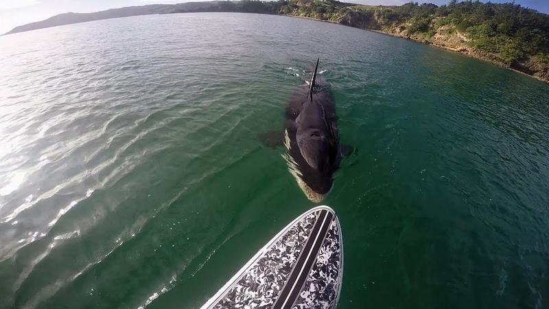 شاهد الرعب الذى يسببه الحوت القاتل حين يقت1
