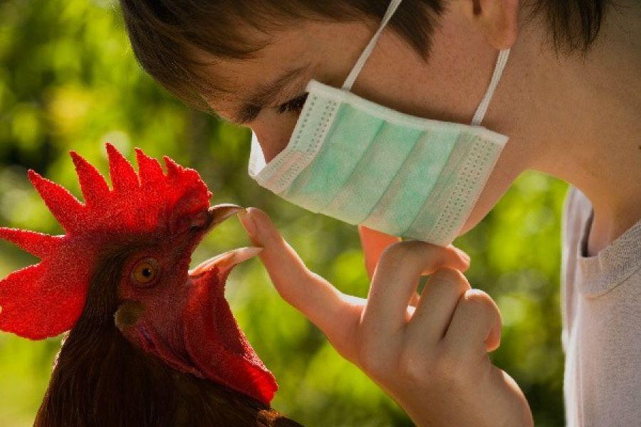 Что такое птичий грипп?