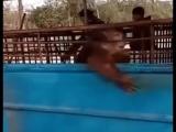 Лысые обезьяны совсем обнаглели