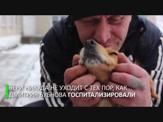 Верный друг: в воронежской области собака почти две недели ждёт хозяина возле больницы