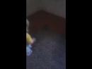 доця грається з їжаком