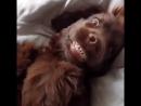 Когда спросили выспался ли я