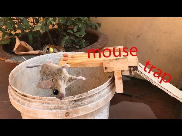 Best Mouse Trap / Mouse trap saving 7 mouse in 10 minute / I Have Ever Tested /Mouse Trap In Action