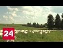 В поисках русской мечты Земля священных рощ Документальный фильм Александра Проханова Россия 24