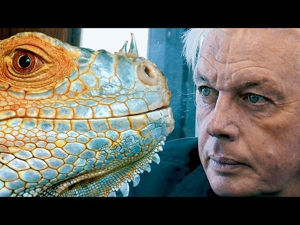 Reptilienii - Cine Sunt Si Ce Vor Ei (Teorii Incredibile) 🗣