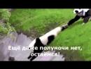 Лето по-русски и немного сумбурно..))