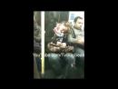 Спящая женщина и незнакомец VHS Video