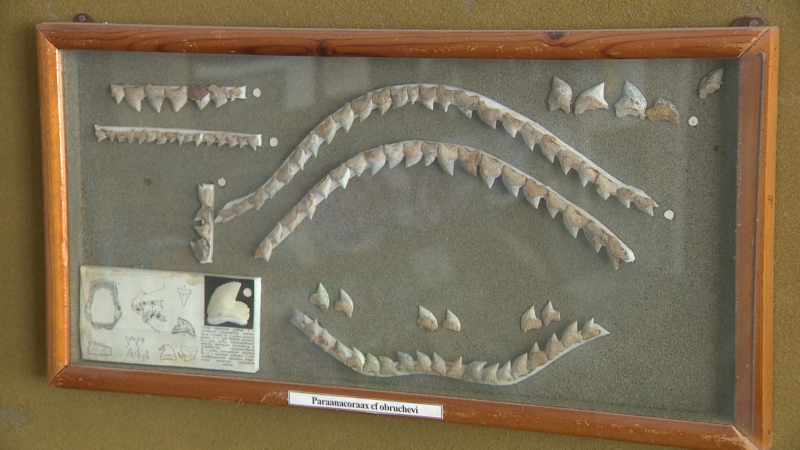 На территории Волгограда найдены зубы древних акул