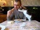 Кот попрошайка Дай колбаски
