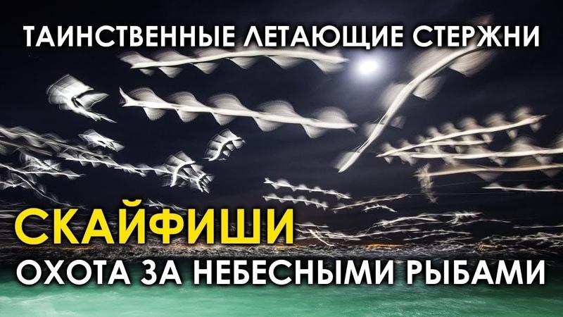 Скайфиши - таинственные летающие стержни. Охота за небесными рыбами. Шнеки. Орбы. Rods. Skyfish