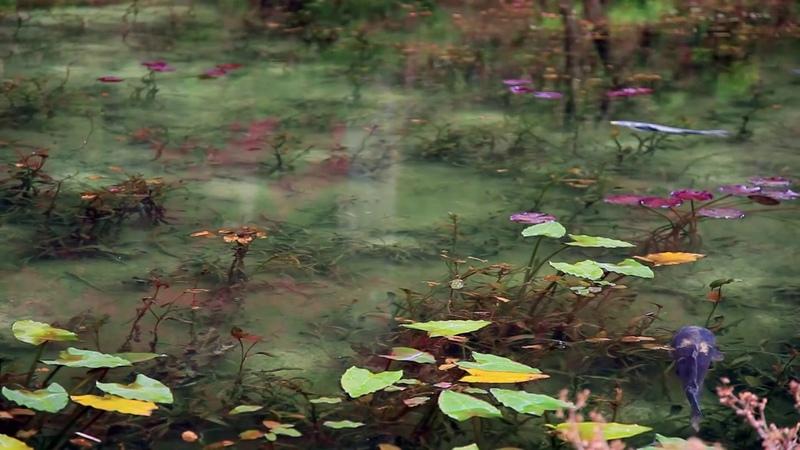 Monet's pond Japan