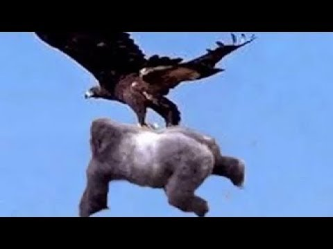 野生動物の驚くべき瞬間!►► イーグルスネークバードウォーターシー