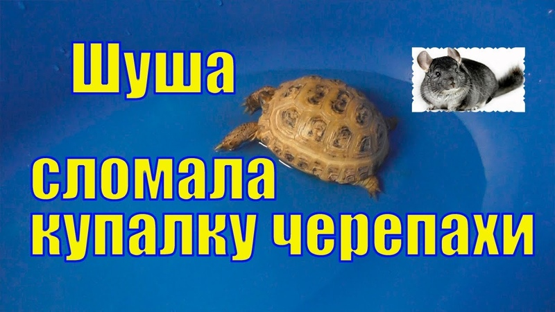 Черепаха Вафелька /Шуша сломала Вафельке купалку