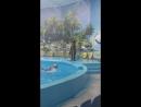 Танец морской львицы,дельфинарий-феодосия2018