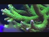 Коралловый риф 4K