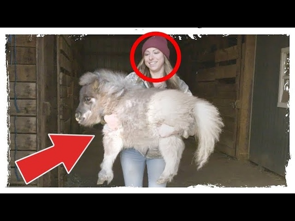 Das Pony wird 10 Jahre eingesperrt, weil es nicht laufen kann, dann passiert ein Wunder!