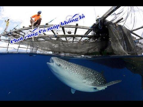 Cá mập khổng lồ tôi đã gặp - nhật ký đi biển 11
