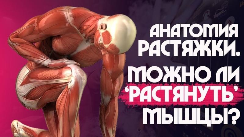 РАСТЯЖКА и СТРЕТЧИНГ КАК алкоголь влияет на ГИБКОСТЬ Мышцы сухожилия и связки