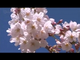 Первые весенние цветы. Весна пришла. Детские песни для детей о весне. Видео с героями мультфильмов.