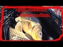 У Ильича Лучшая рыбалка для всей семьи Бешенный клев карпа