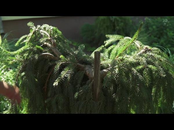 Mans zalais darzs Valentinas Kušneres dārzā Olainē
