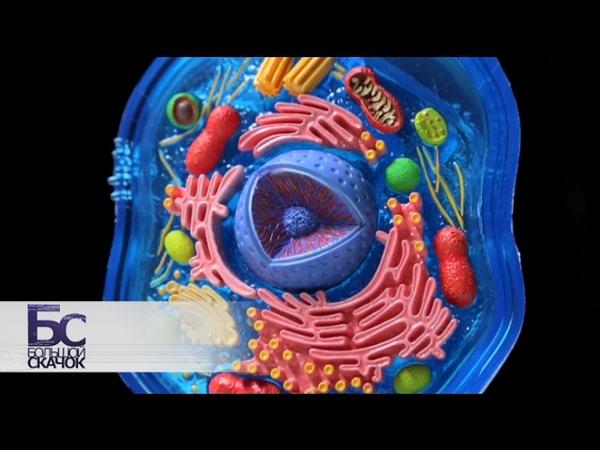 Большой скачок. Тайная жизнь клетки ,jkmijq crfxjr. nfqyfz bpym rktnrb