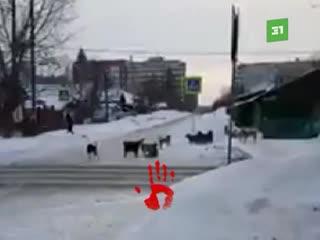 «Рычат и кидаются». Около 20-ти собак держат в страже жителей улицы Косарева в Челябинске
