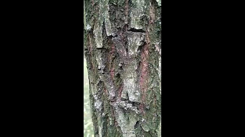муравьишки