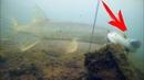 Атака ЩУКИ на ПЛОТВУ! Рыбалка Осенью 2018 Подводная съемка