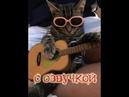 Приколы с котами – смешная озвучка животных – Ржака до слез с котом Мурзиком Domi Show