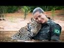 Утопающий ягуар обнял людей как простой домашний кот История дикого кота ягуара