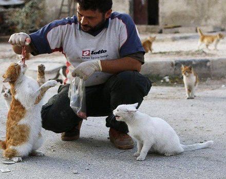 Сирийский электрик Мохаммед Джалил за время боевых действий спас в своём приюте более 100 котов. Он отказывается оставить их даже в самые горячие и опасные для жизни дни. «Многие люди из-за