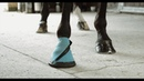 Woof Wear Medical Horse Poultice Hoof Boot Introduction