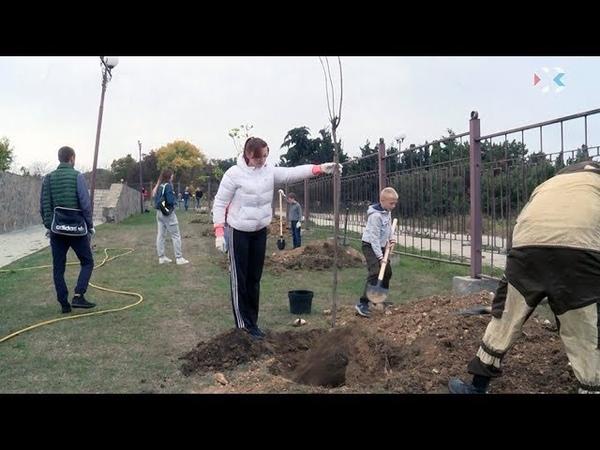 Для озеленения города на субботнике закупили более 4000 саженцев
