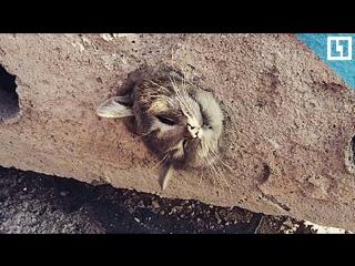 Котик застрял в бетонной плите