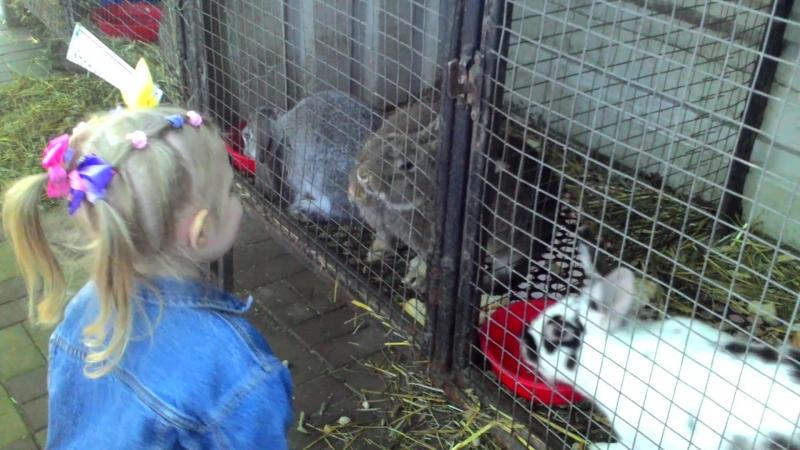 Симочка и кролики