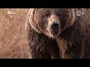 Nat Geo Wild Гризли Аляски бросают вызов Короли острова Кодиак 1080р