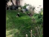 кролька носится по газону.mp4