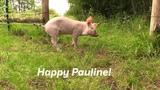 Happy Pauline!