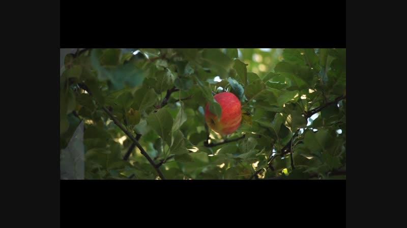 Лениза и Символ Гайнетдиновы-Бер тэн, бер жан итеп яраткан (клип)